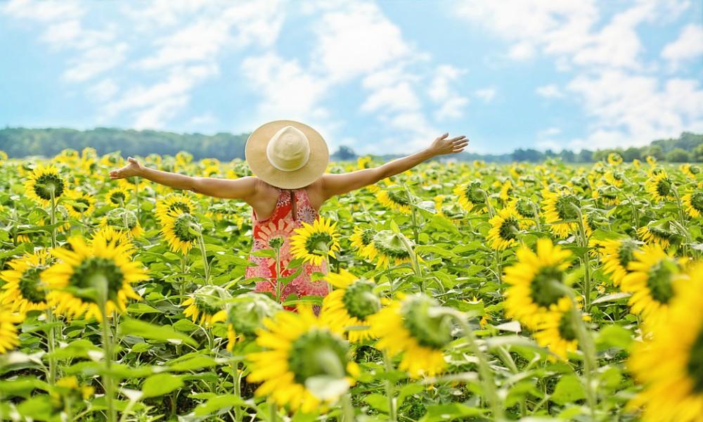 happy sunflowers sun